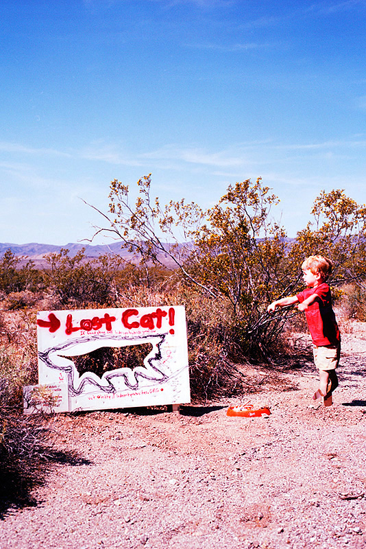 lost cat sign and toddler drawing attention to sign
