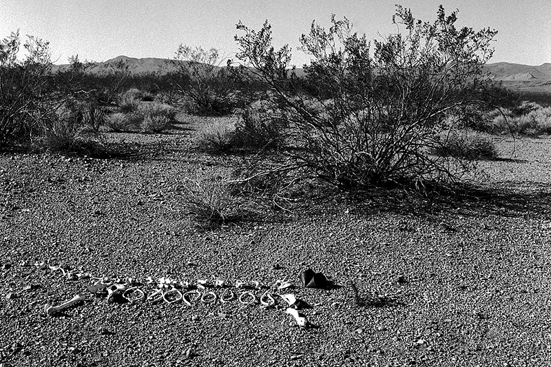 dog bones on desert floor, head replaced by rusted can