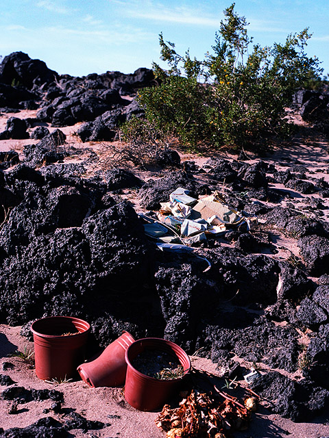 empty pots, broken ceramics, dead flowers on a lava flow